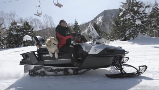 Meet Jones, Shiga Kogen's ski patrol dog