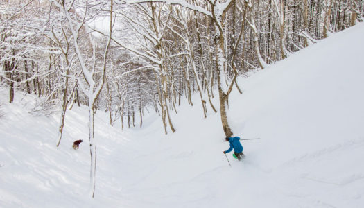 Madarao's powder skiing just got even better